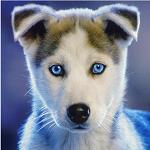 mad_puppy