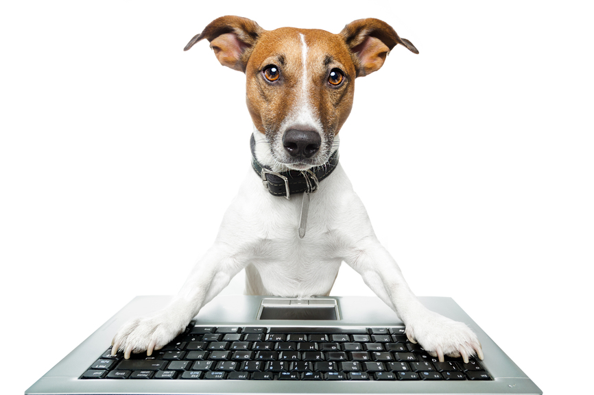 Dog using a computer and searching the web